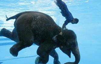 水中騎象表演