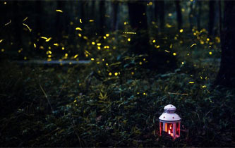 南京靈谷寺螢火蟲夏夜飛舞 好似點點繁星