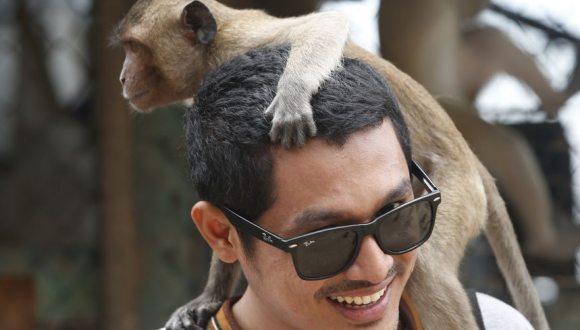 泰國對大批猴子實施強制絕育 控制數量防擾民