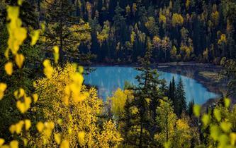 喀納斯:秋景入畫來