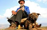 研究顯示:獨居老人養條狗 早逝風險降三成