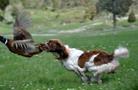 特朗普新設立的動物保護委員會成員大多數是獵手