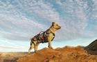 """流浪狗被探險家所救 從此""""狗生""""大不同"""