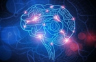研究:日益艱難的生態問題擴大人類腦容量
