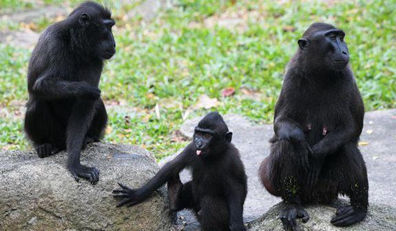"""新加坡動物園裏的""""新生兒"""""""