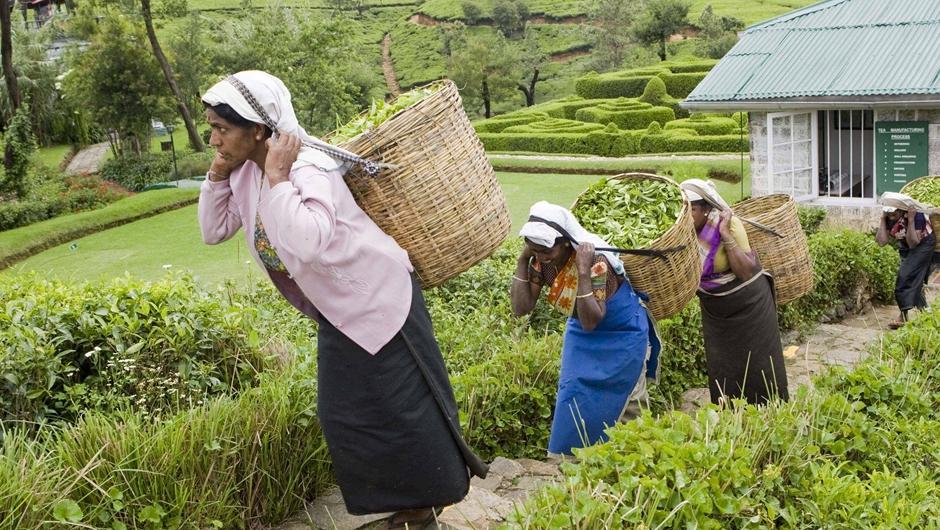 茗香亞洲 茶韻綿長