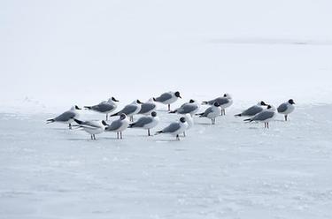 雪後青海湖