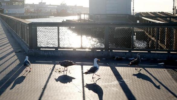 疫情下的美國舊金山漁人碼頭