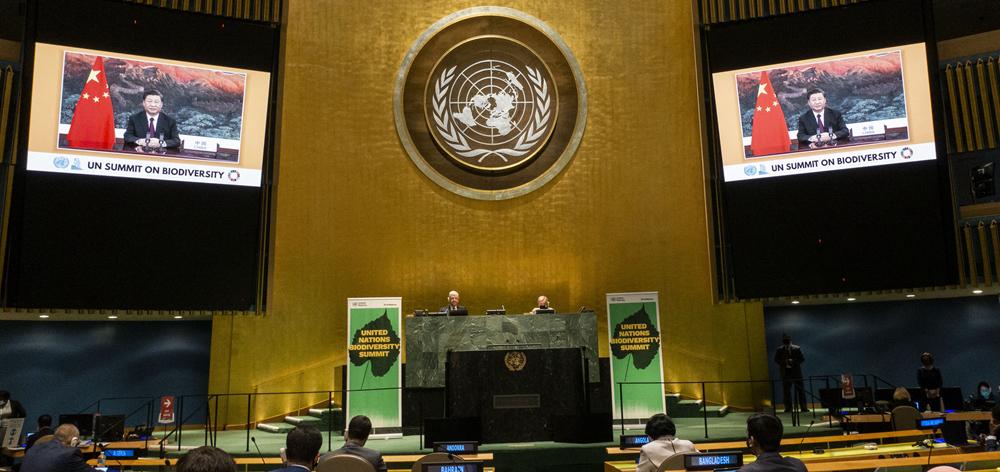 習近平在聯合國生物多樣性峰會上發表重要講話
