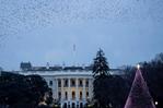 """華盛頓:疫情下國家聖誕樹""""瘦身"""""""