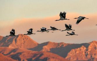 黑頸鶴的冬日家園