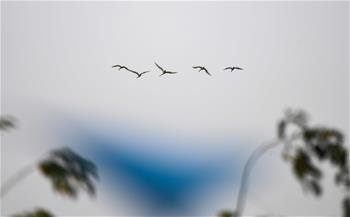 早春琵鷺飛