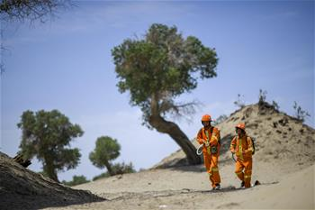 守護沙漠英雄樹