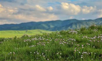 原子城:鮮花開滿草原