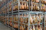 揭秘美味西班牙火腿的生産過程【組圖】