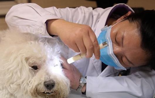 寵物醫院裏的忙碌春節