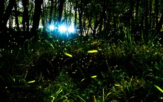 如繁星閃爍!麗水濕地公園螢火蟲漫天飛舞