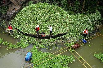 廣西柳州清理水浮蓮保護水環境