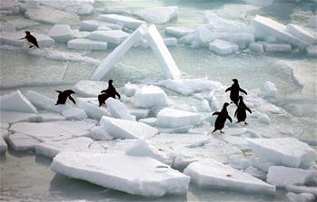 南極風光·可愛生靈