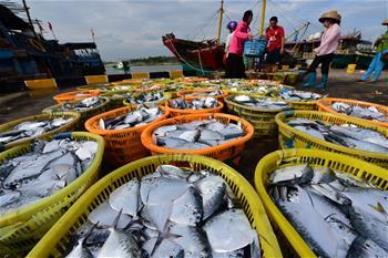 海南瓊海:秋來捕撈忙